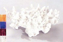 Akvarijní dekorace korál XL 280mm bílý